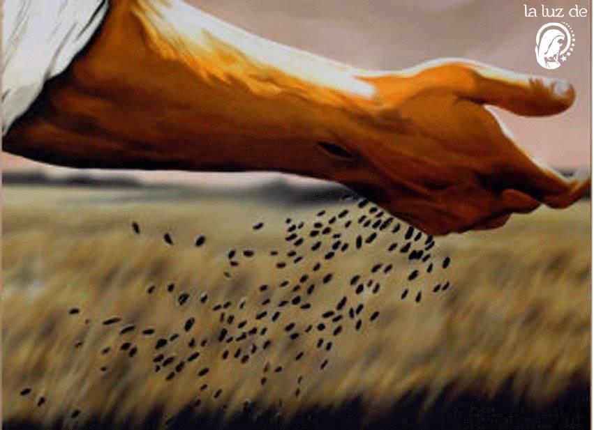 Lectura del santo evangelio del día según san Mateo (12,1-8):
