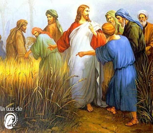 Evangelio del día según San Mateo 13,36-43.