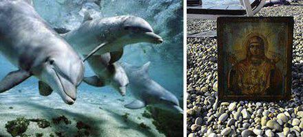 Milagro increíble: 12 delfines llevan a orilla una imagen de la Virgen, que había acabado en el fondo del mar
