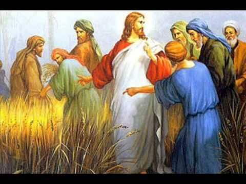 Evangelio según San Mateo12,1-8.