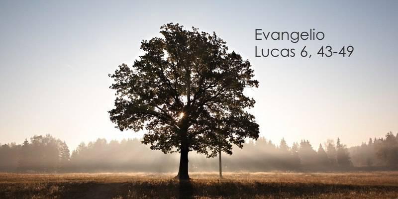 Evangelio según San Lucas 6,43-49.