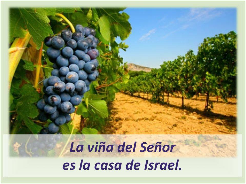 La viña del Señor es la casa de Israel