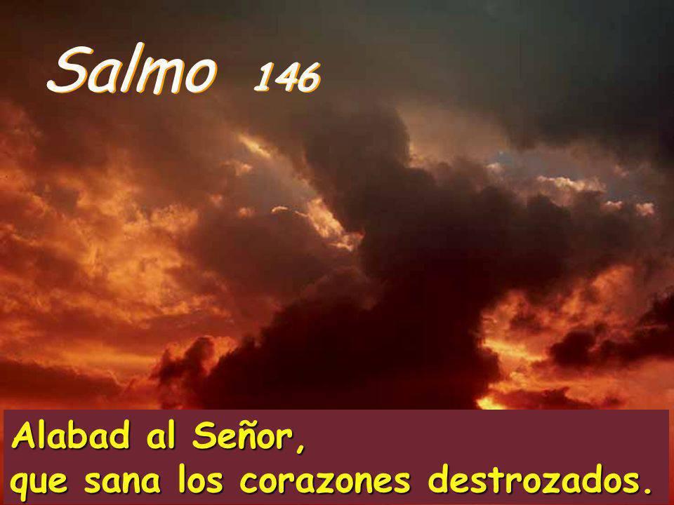 Alabad al Señor, que sana los corazones destrozados