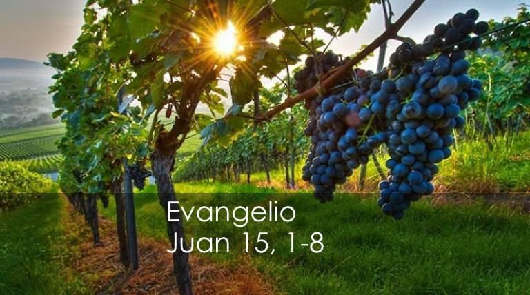 Evangelio según San Juan 15,1-8.