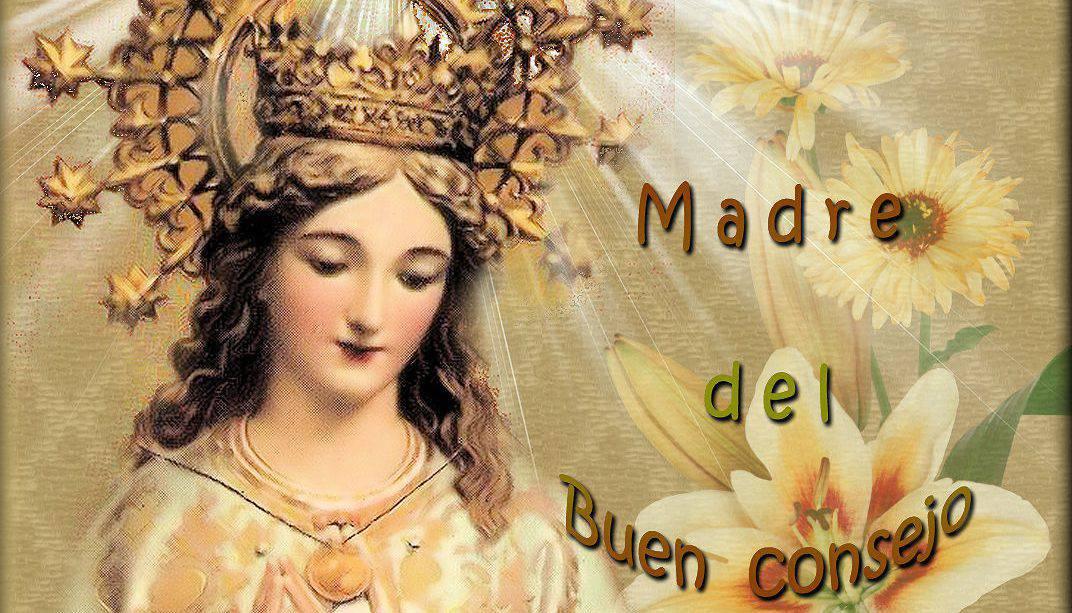 Flor del 9 de mayo: Madre del buen consejo