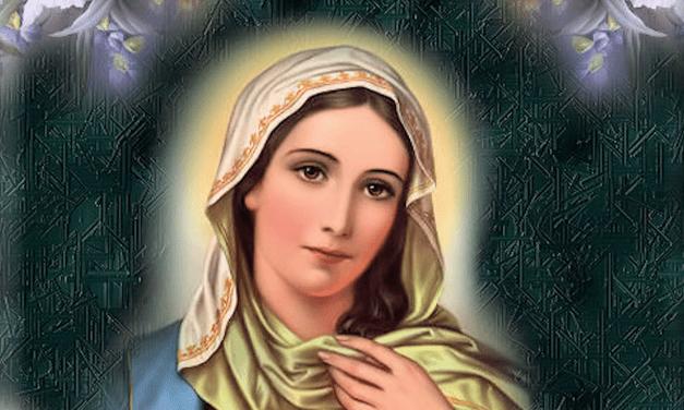 Flor del 20 de mayo: María Corredentora