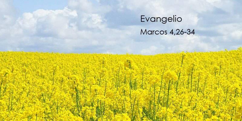 Evangelio según San Marcos 4,26-34.