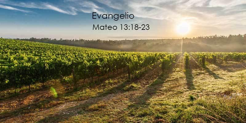 Evangelio según San Mateo 13,18-23.