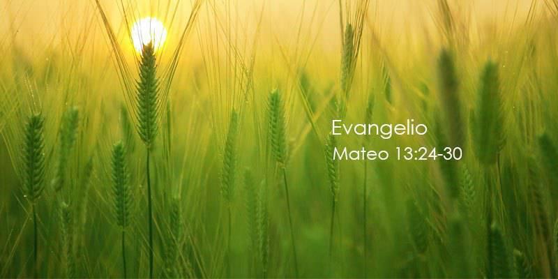 Evangelio según San Mateo 13,24-30.